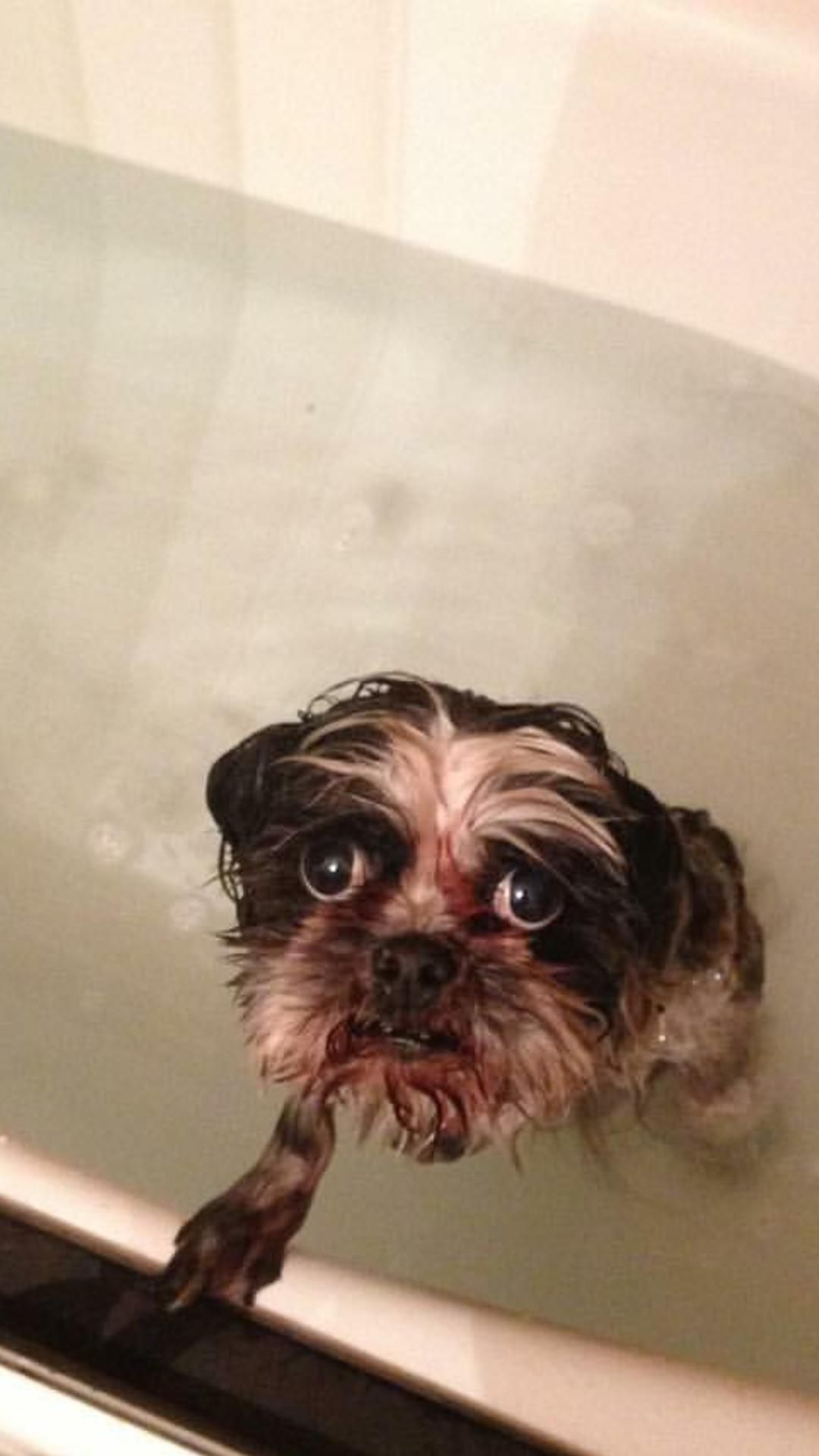 When Your Dog Doesn T Want To Take A Bath And He Looks Up At You