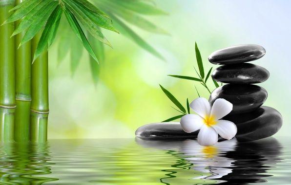 Обои картинки фото spa, спа, камни, цветок, бамбук, вода | Сады в ...