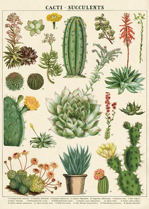 Poster / inpakpapier Cactus - Cavallini & Co   Meerleuks