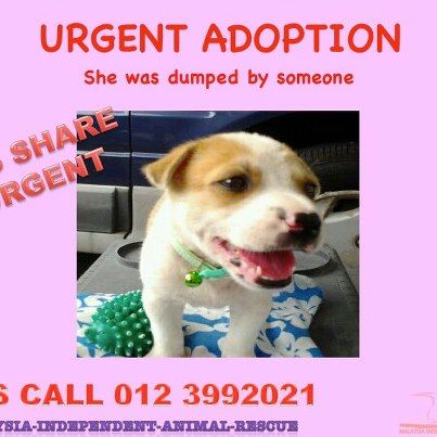 Rescued Puppy Up For Adoption Http Www Facebook Com Pages
