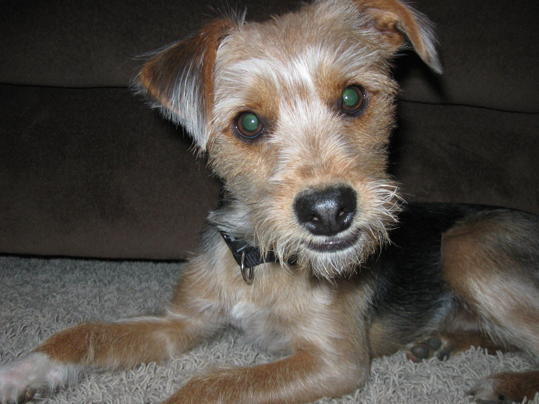 benjithemovie Dog photos, Your dog, Photo
