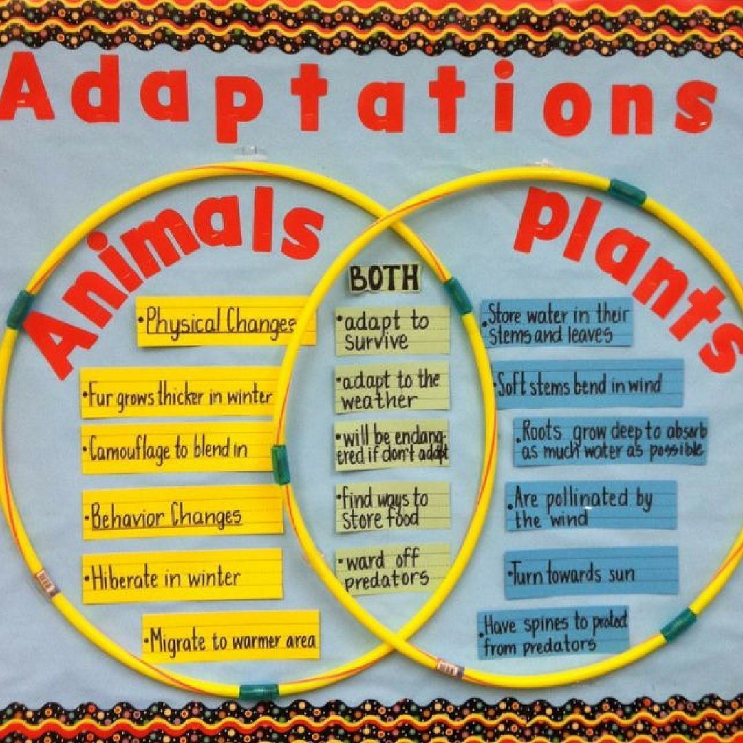 Use a Venn Diagram to demonstrate animal and plant adaptations.   Science  bulletin boards [ 1080 x 1080 Pixel ]