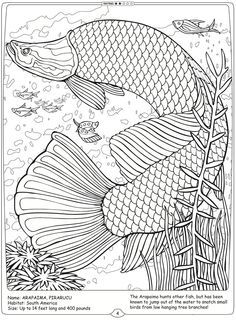 Welcome To Dover Publications River Monsters Of The World Arapaima