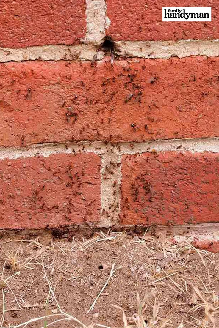 How to Get Rid of Ants in the House & Your Yard Get rid