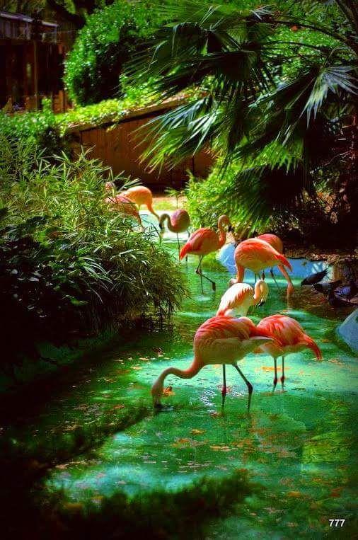 Flamingo Pejzazhi Priroda I Rozovye Flamingo