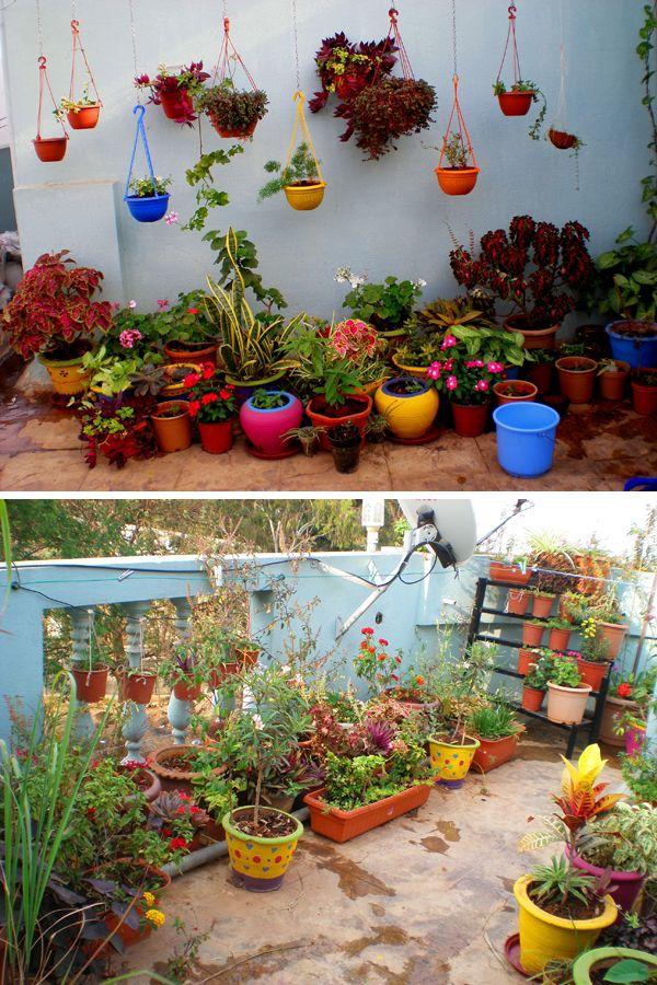 Garden Tour: Madhu's colorful terrace garden | Balcony ...