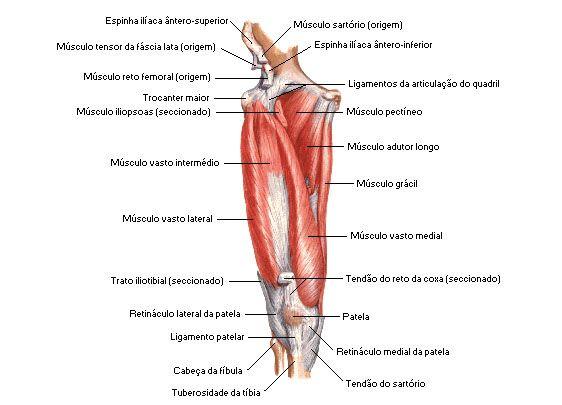 Paralisia do nervo ciático slideshare