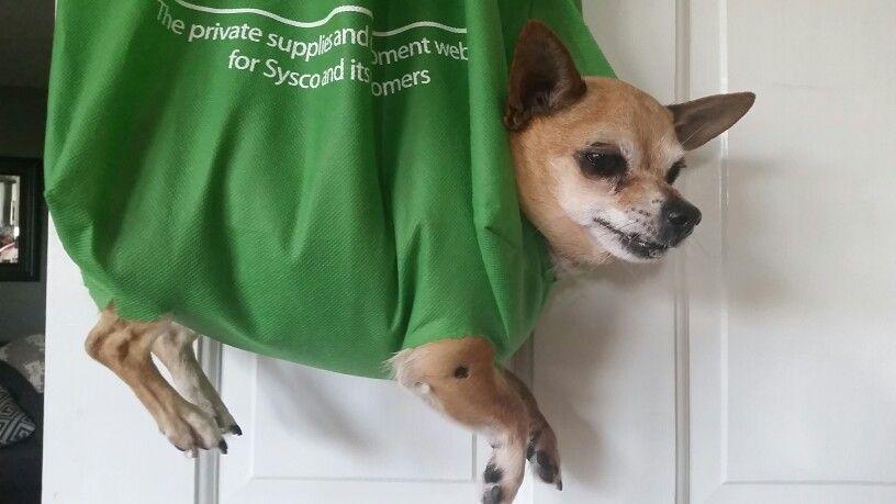 Pin On The Doggie Bag