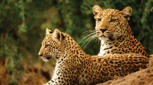 Fow 24 News Ten Tourist Destinations In Africa On Fow24news Africa Safari Southern Africa Africa Adventure