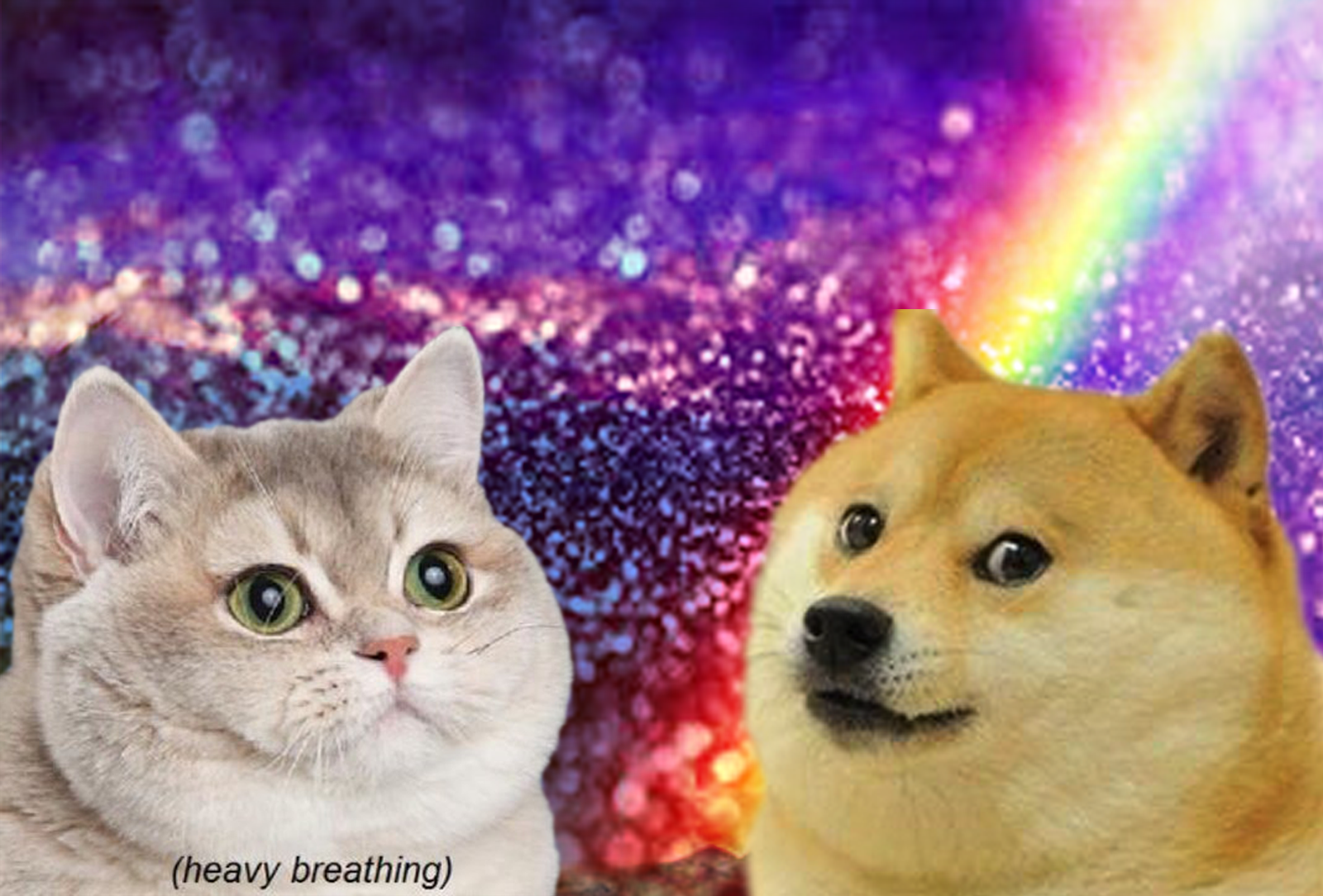 Heavy Breathing And Wow Doge Meet Heavy Breathing Cat Cats Funny Cats