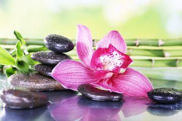 Szukaj Zdjec Kategoria Rosliny I Kwiaty Orchids Pebble Art Flowers