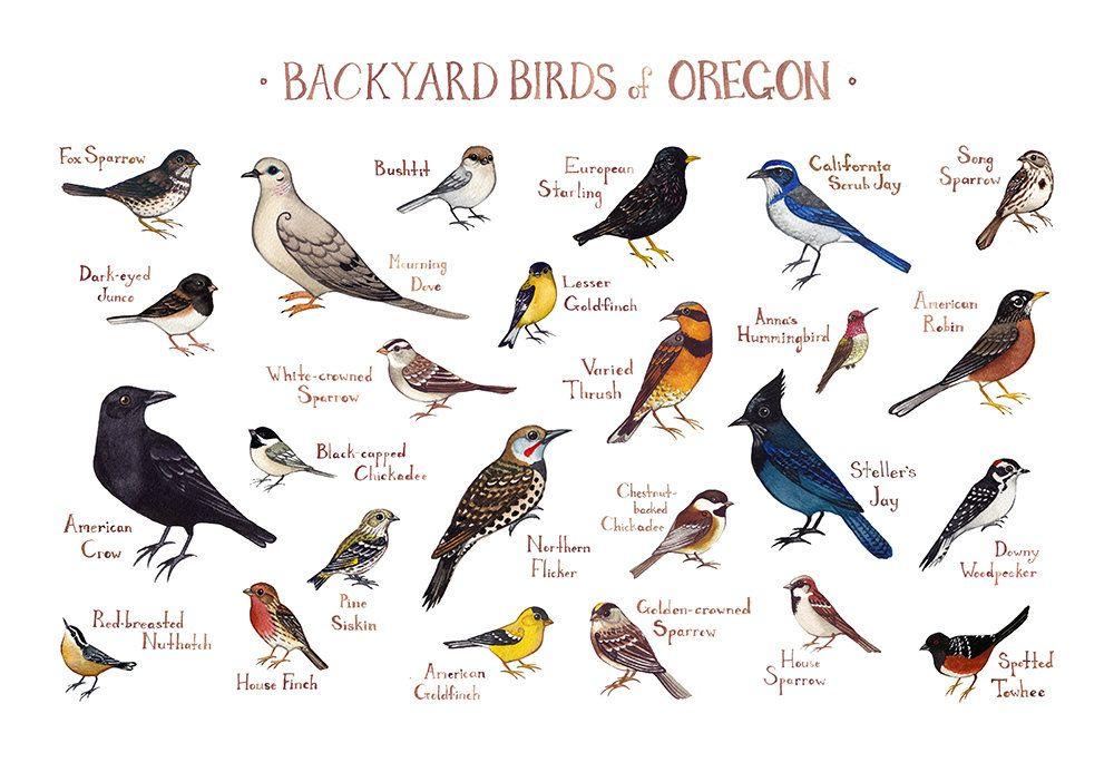 Oregon Backyard Birds Field Guide Art Print / Watercolor