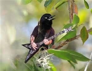 lovers birds art - Bing images