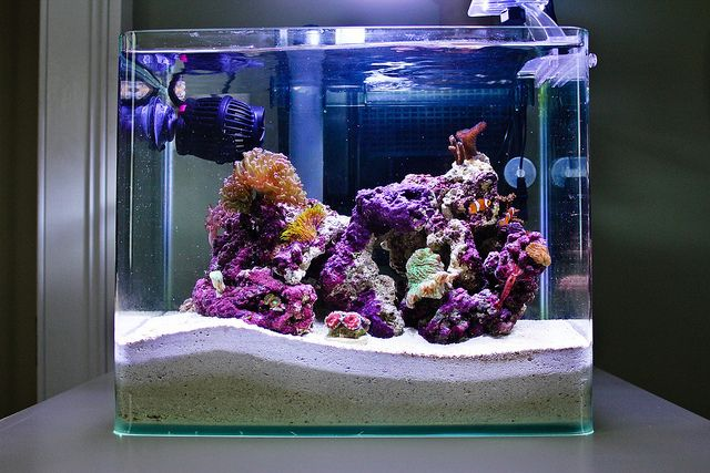 Acan Aquarium Reef Tank Saltwater Fish Tanks