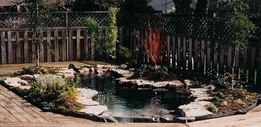 An above ground pool converted into a beautiful pond for Pool to koi pond conversion