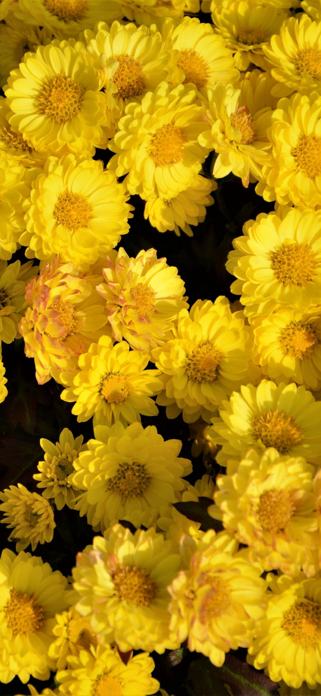 Pin By Kit On ดอกไม Yellow Flower Wallpaper Yellow Flowers Yellow Wallpaper