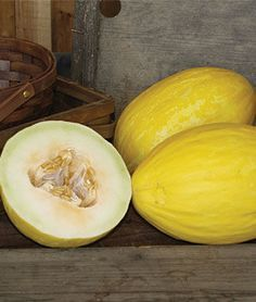 Melon Canary Spanish Sun Hybrid Melon At Burpee Com Watermelon Seeds Fruit Plants Melon The cantaloupe, rockmelon (australia and new zealand), sweet melon, or spanspek (south africa) is a melon that is a variety of the muskmelon species (cucumis melo) from the family cucurbitaceae. pinterest