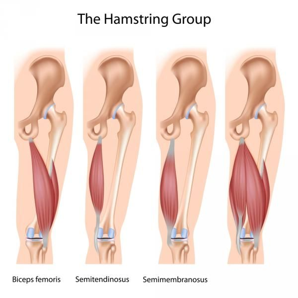 The King of Hamstring Exercises | Breaking Muscle | Sports Medicine ...