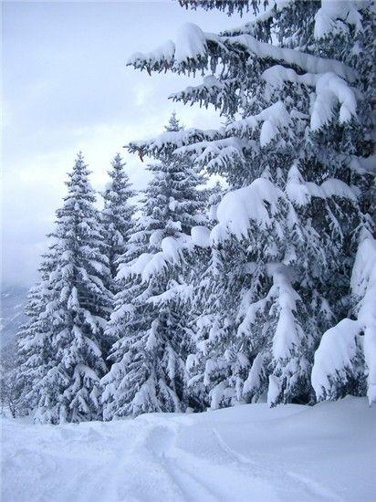 Snežna Vlasina
