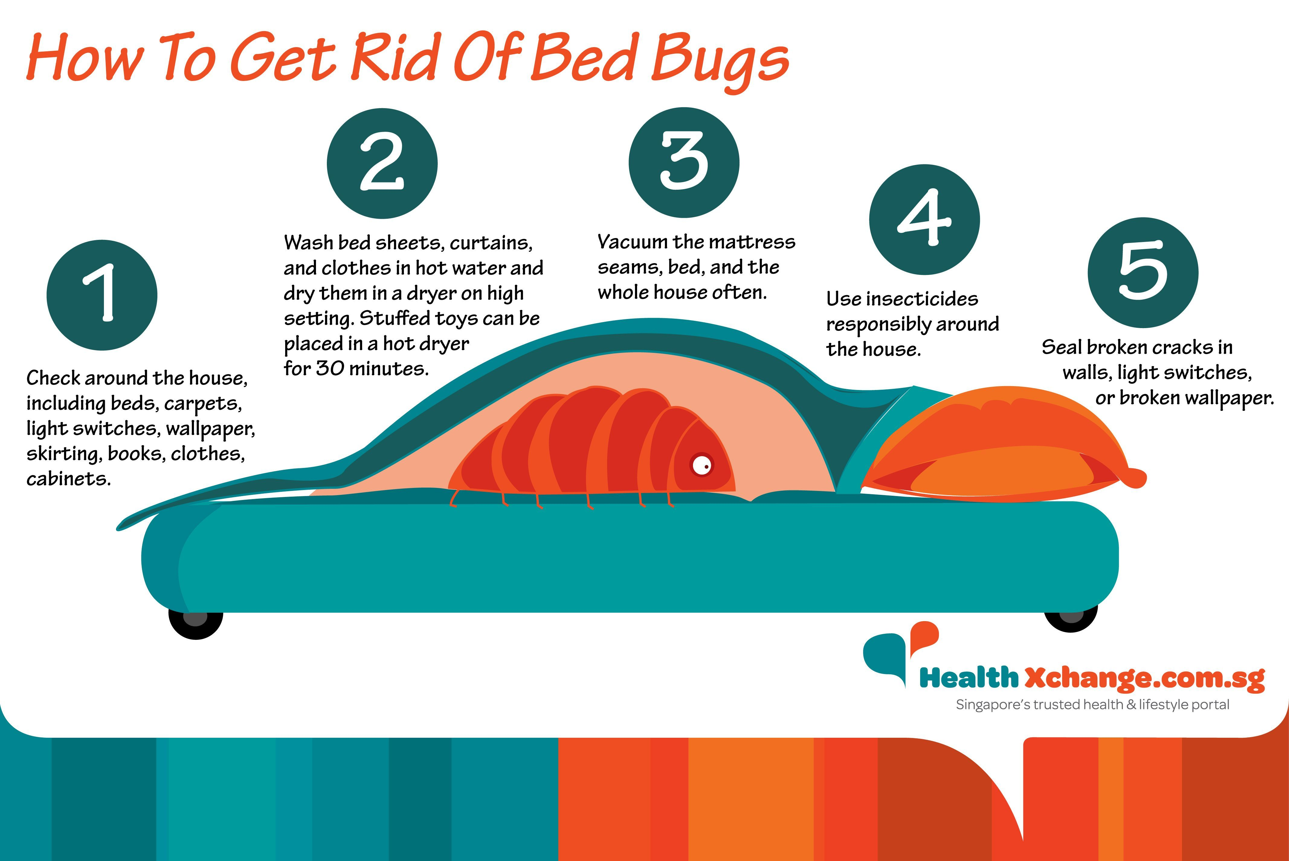 How To Get Rid Of Bed Bugs Bed bugs, Rid of bed bugs