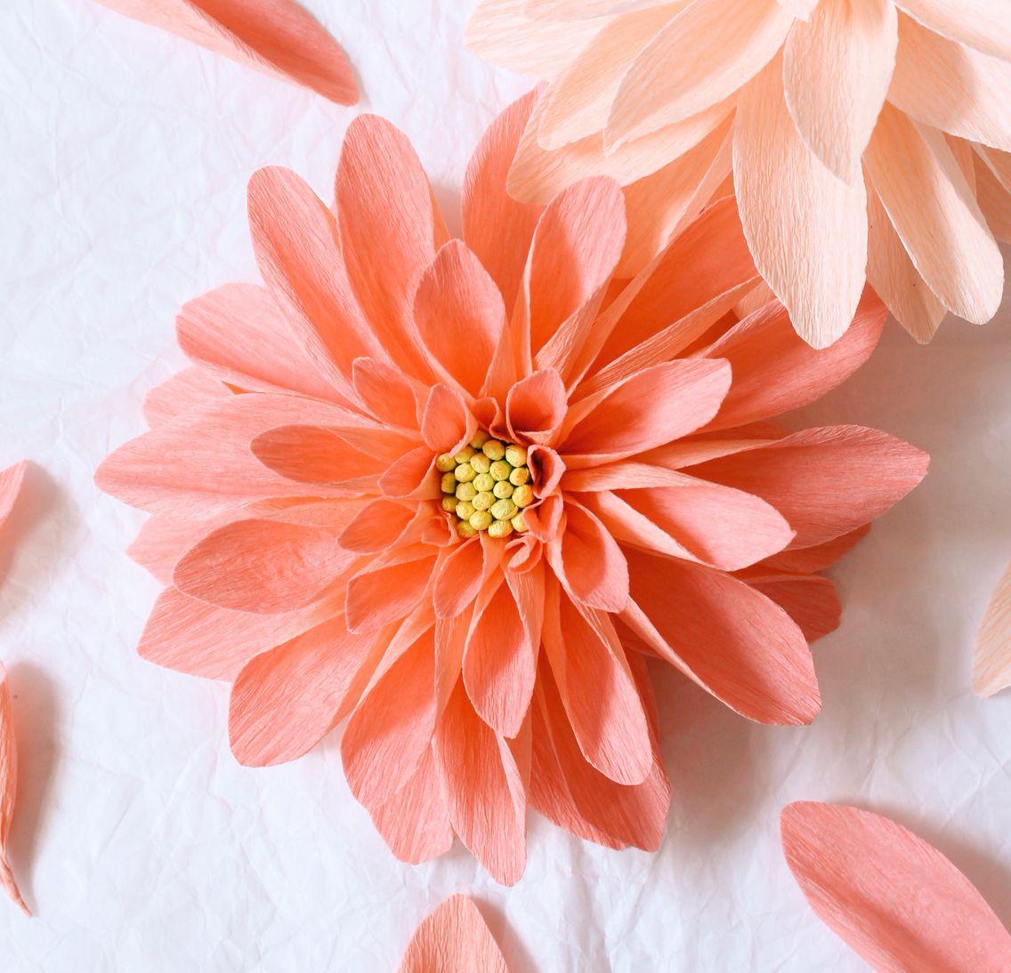 paper dahlia by a petal unfolds more