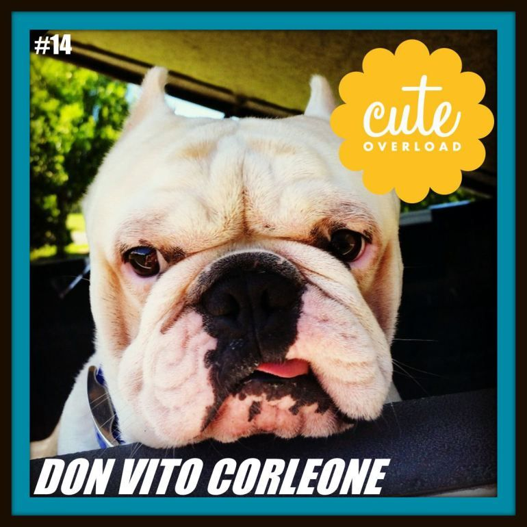 C O Trading Cards 14 Don Vito Corleone Trading Cards Cards Person