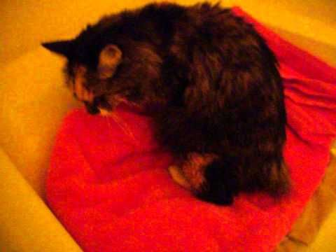 Katie A 14 Year Old Cat Dumped At The Shelter July 8 2014