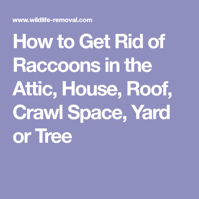 How To Get Rid Of Raccoons In The Attic House Roof