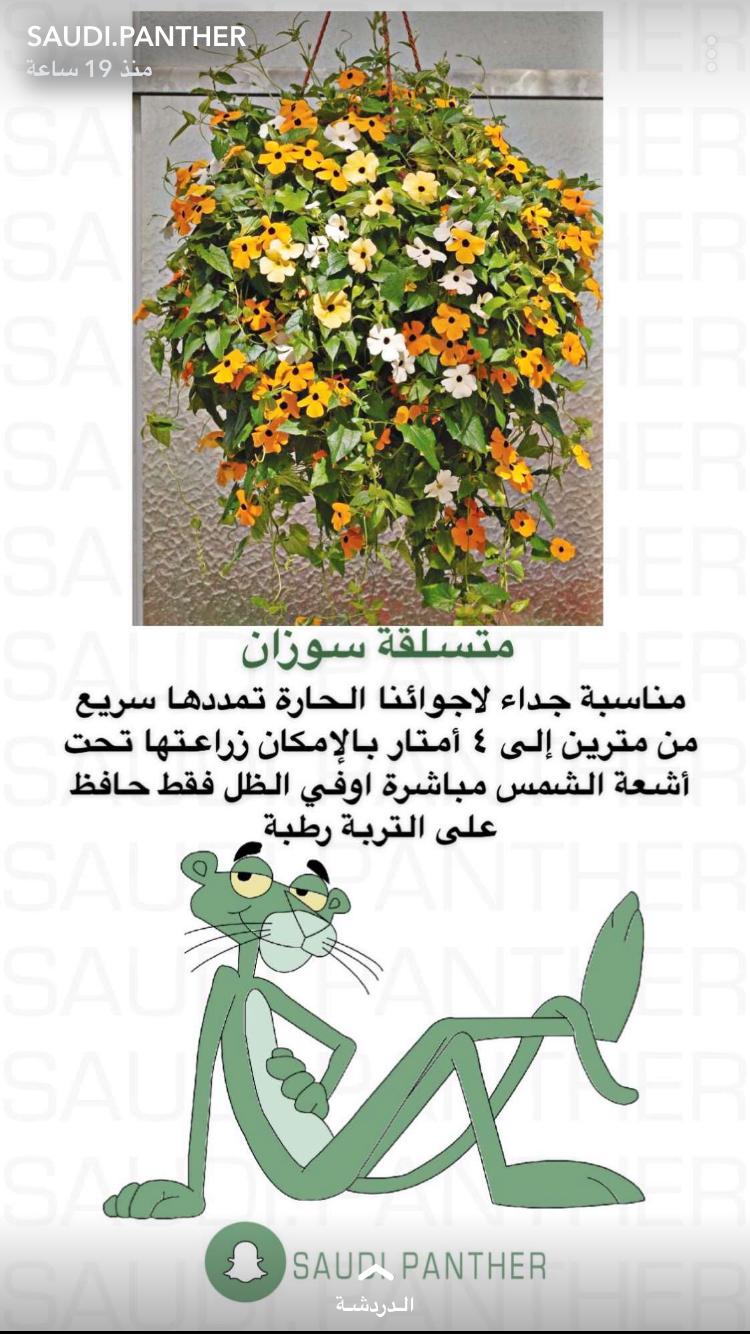 Pin By Dudi Alm On نباتاتا Tiny Garden Ideas House Plants Indoor Plant Decor