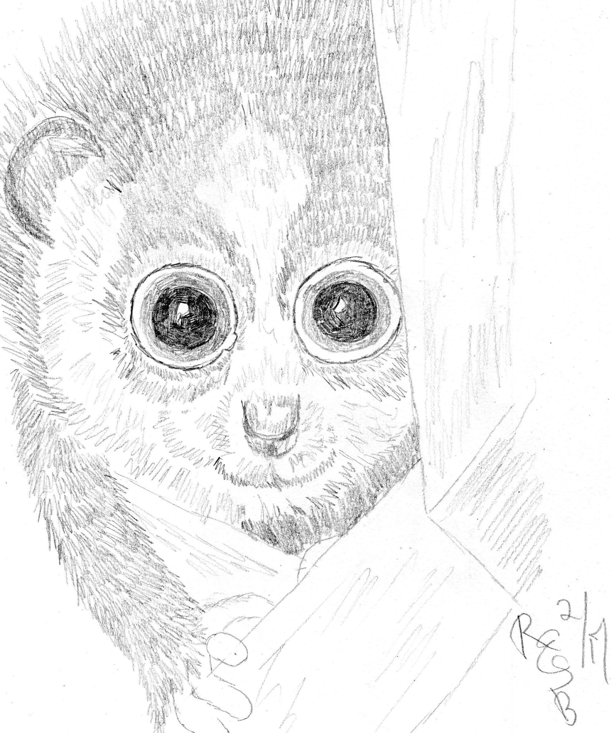 Loras monkey