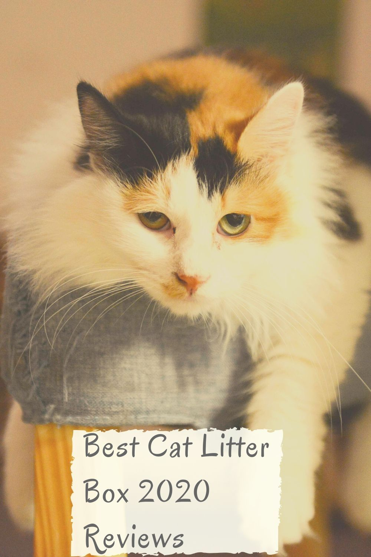 Best Cat Litter Box 2020 Reviews in 2020 Cool cats, Best