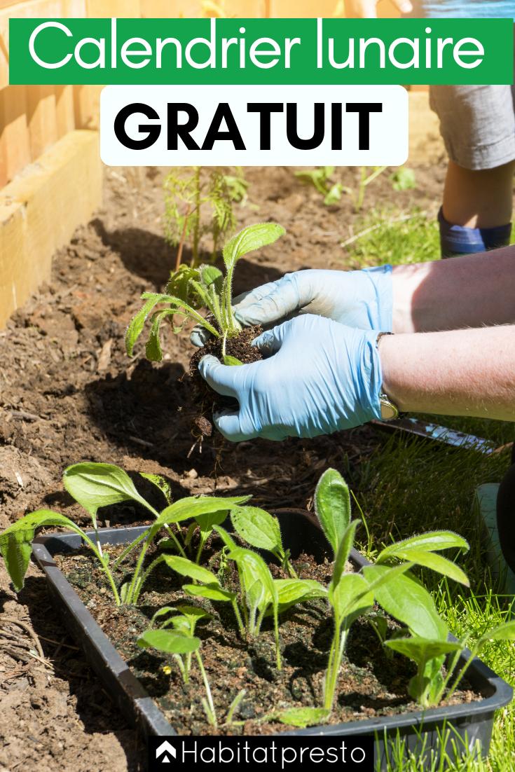 Calendrier Jardinage Lunaire 2019.Comment Jardiner Avec La Lune Votre Calendrier Lunaire