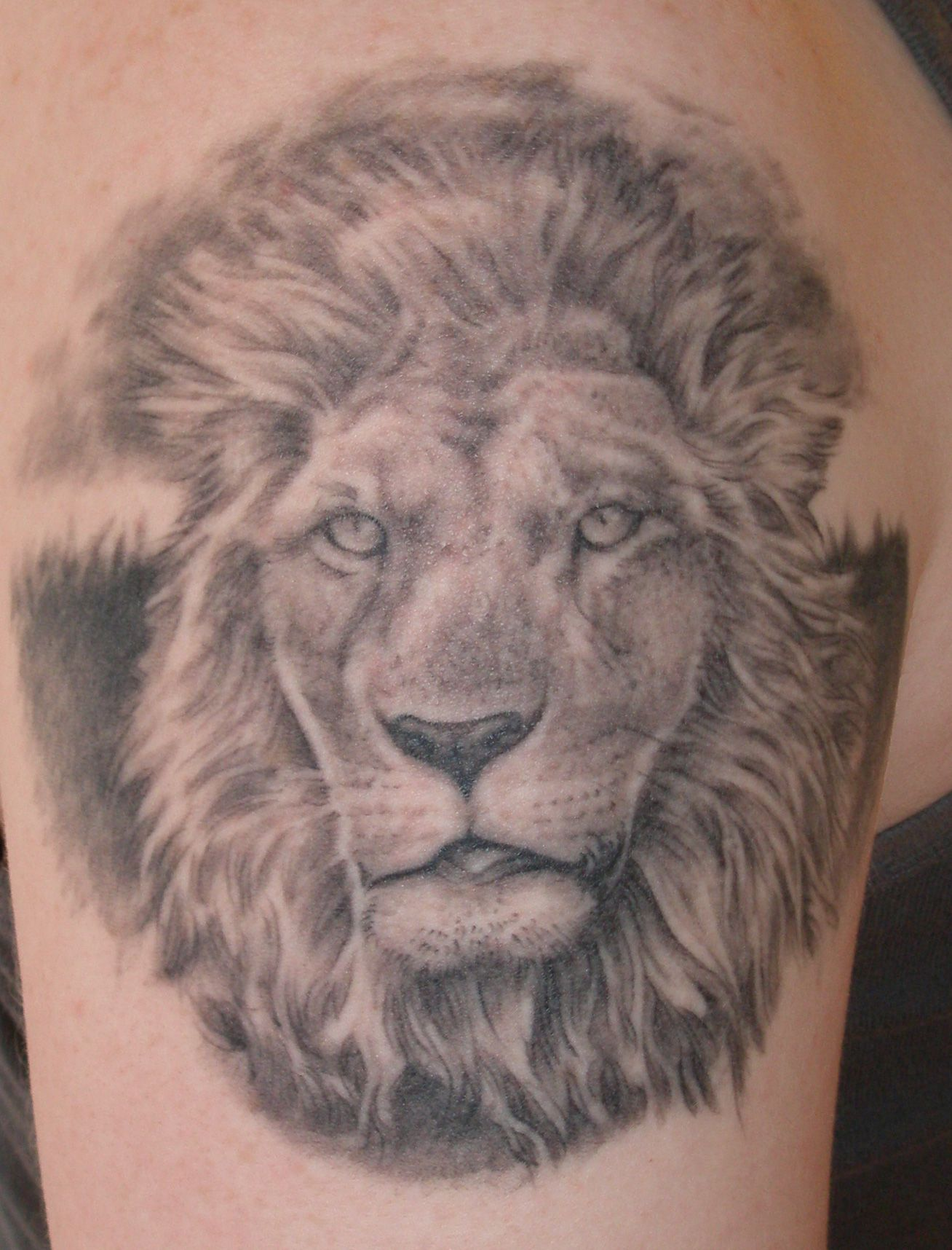 Lion chest tattoo for pinterest lion tattoo designs on for Lion chest tattoos
