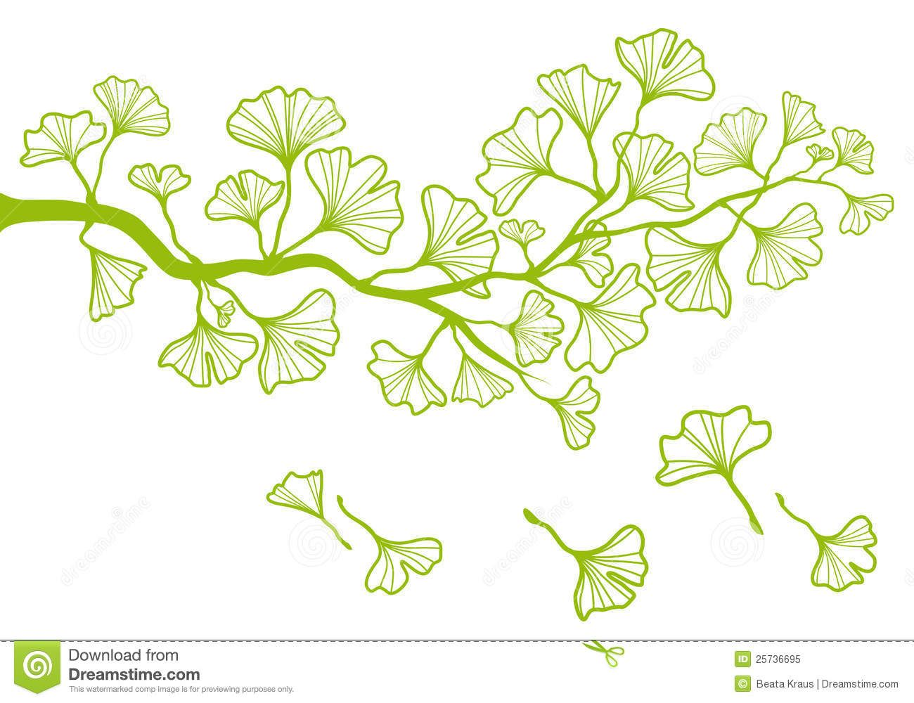 Ginkgo Branch With Leaves, Vector - Download From Over 30 Million ...