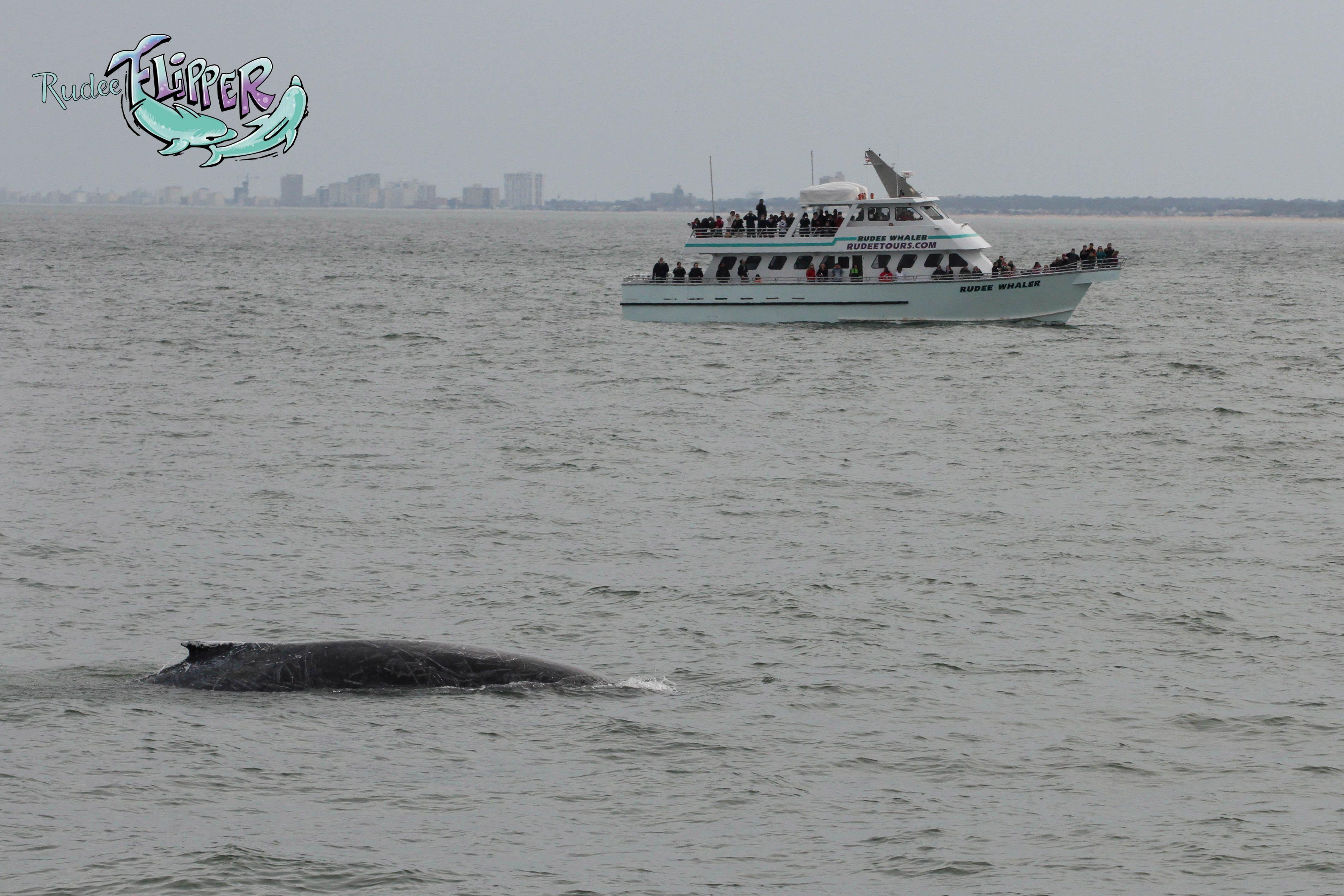 Whale Watching Rudee Tours Virginia Beach Va