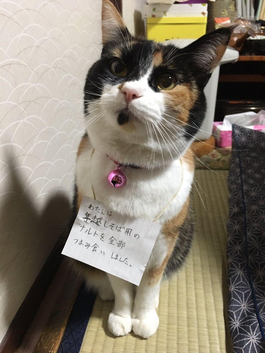 かわいいから無罪 ネットで話題を集めた笑える動物画像 22枚 ペットびより 反省猫 ペット 子猫