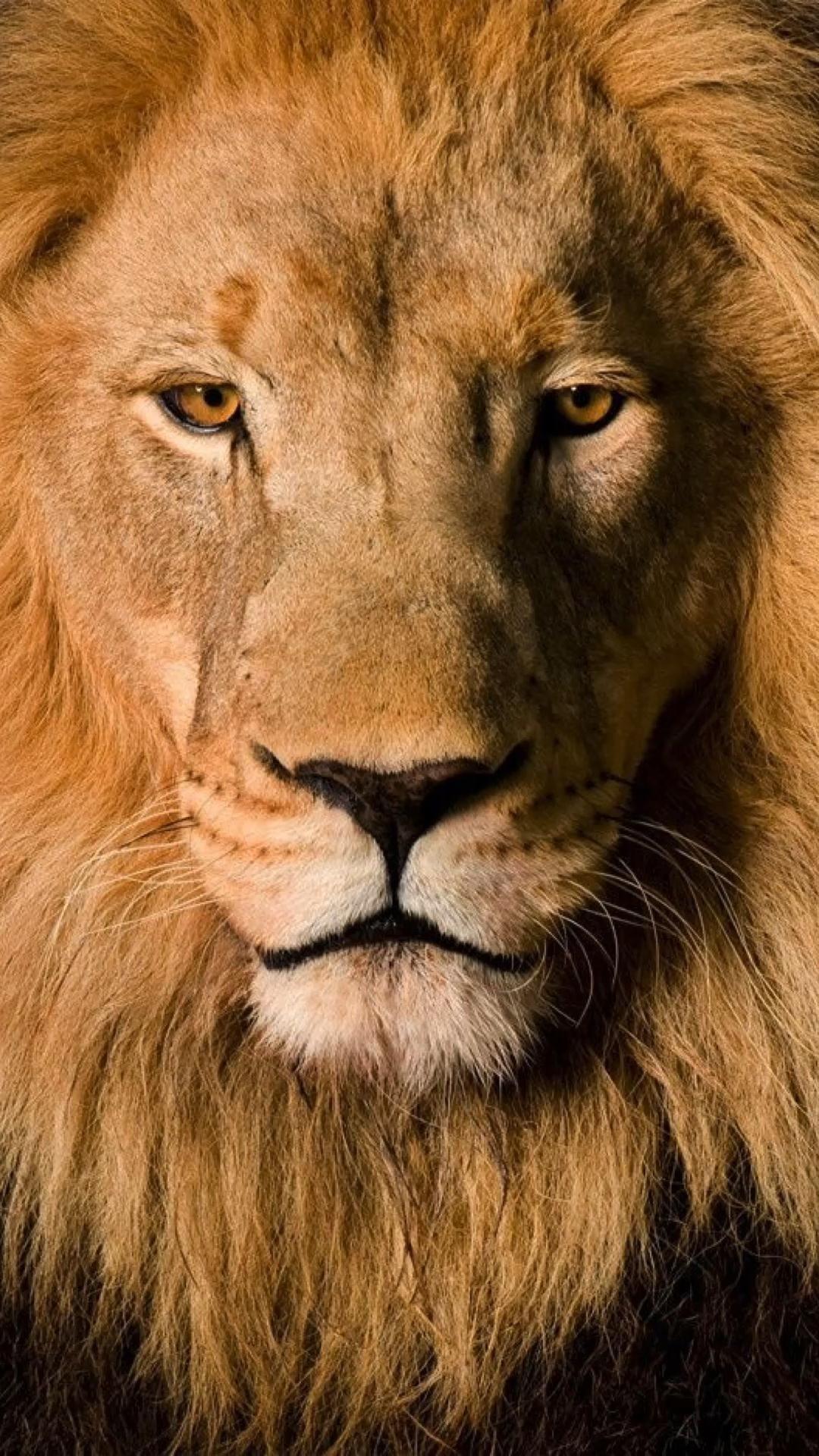 Arquétipos  – Leão , águia , tigre , lobo , flamingo , coruja e borboleta .