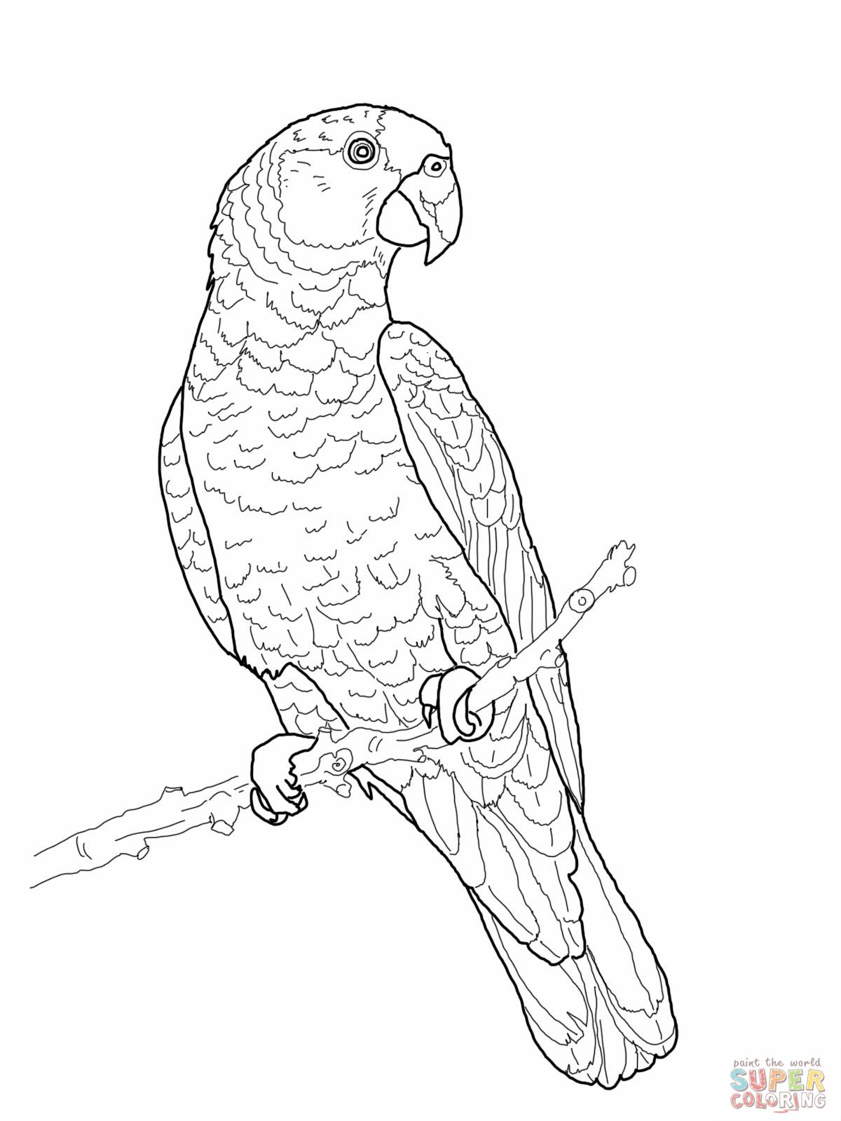 Imperial Amazon Parrot Coloring Page Jpg 1200 1600 Parrots Art