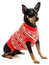 Malha tricot para pets knitwear for pets #cacaudresspet cacau-dress-pet-roupa-pets-cachorro-gatos-malha-tricot-nova-petrópolis-rio-grande-do-sul-animais-de-estimação-comprar