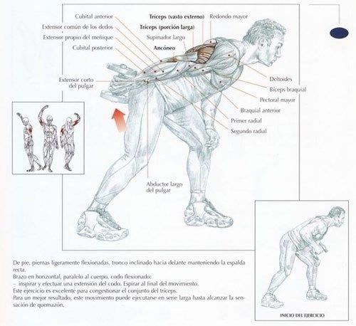 Tabla de ejercicios para el triceps