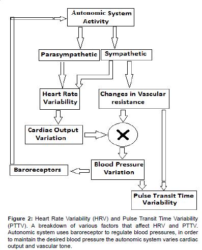 bioengineering-biomedical-science-Heart-Rate-Variability