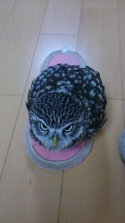 cute owl3