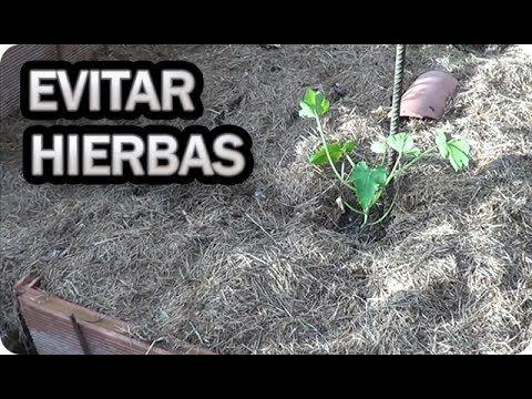 Como Evitar Las Malas Hierbas De Forma Natural En El Huerto Y Pasillo Malas Hierbas La Huertina De Toni Hierbas