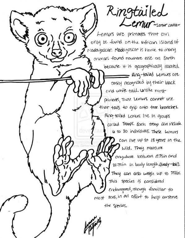Ring Tailed Lemur Coloring Page Wild Kratts Bday Party
