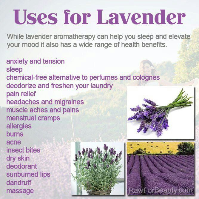 Lavender Health Benefits Lavender Benefits Lavender