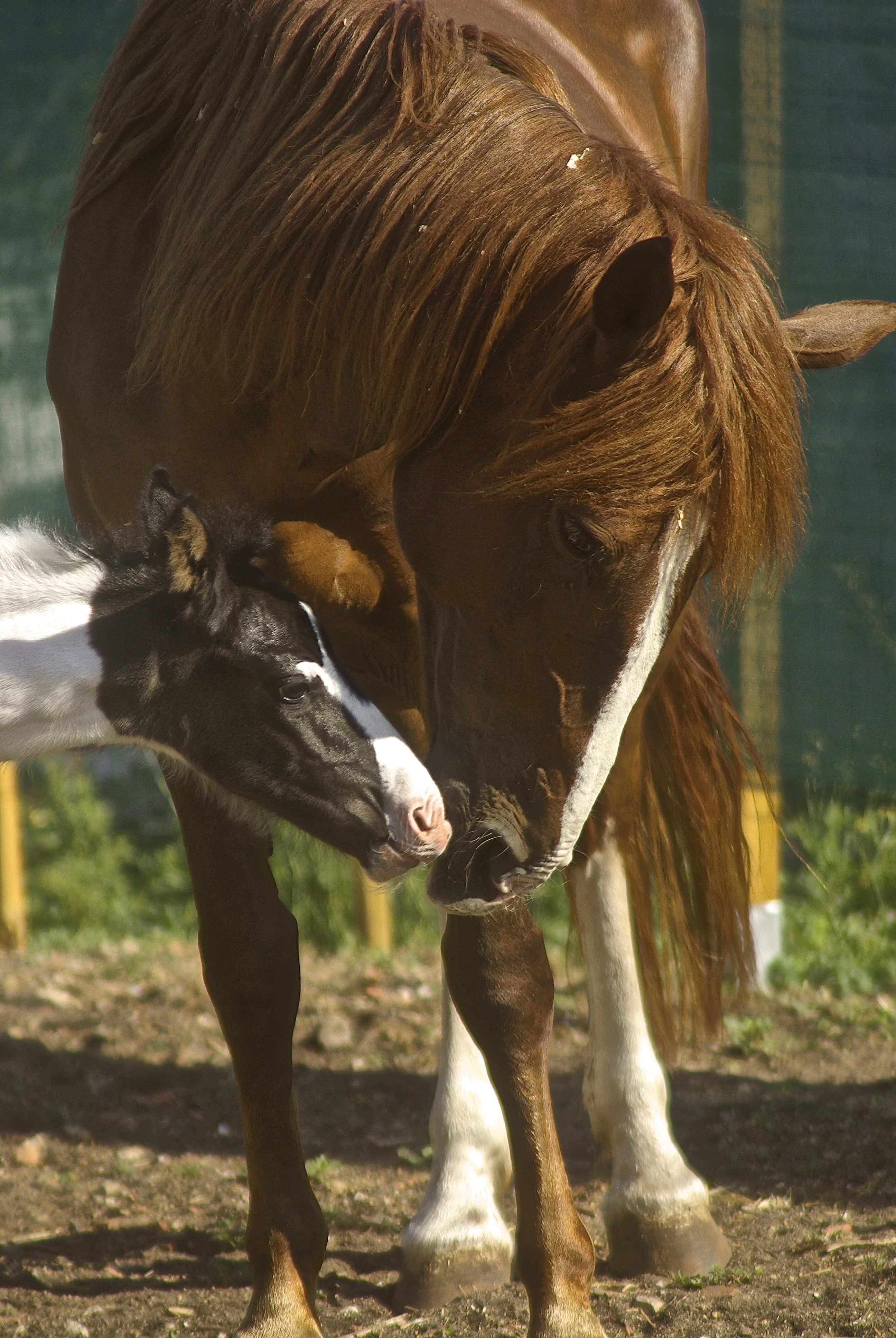 My Horses - the little One just has 1 day in this photo ( born on June 14, 2014 at 11:30 GMT )