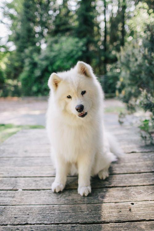 Simple Wolfbear Chubby Adorable Dog - dcdbf81138dba8778ceeca965bbc2962  Best Photo Reference_559640  .jpg