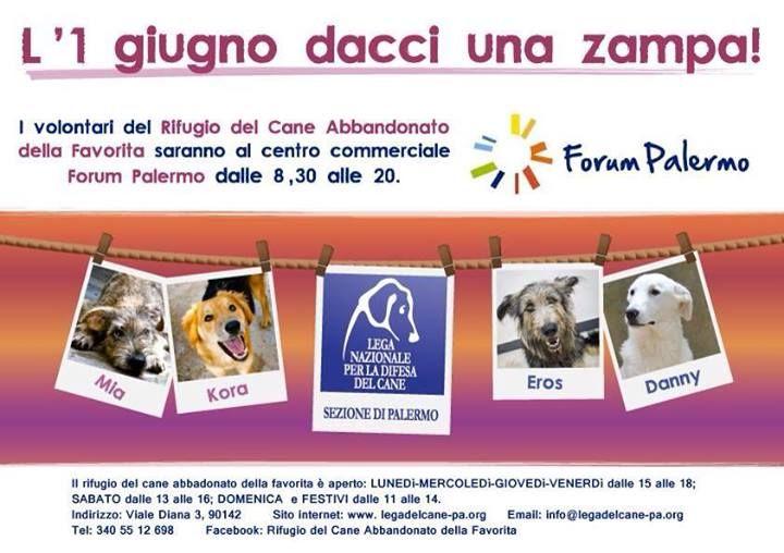 """1/6 aiuta la #LegadelCane di #Palermo! 8:30/20:00 c/o cc """"Forum"""" - raccolta per i #cani del #Rifugio #Favorita."""