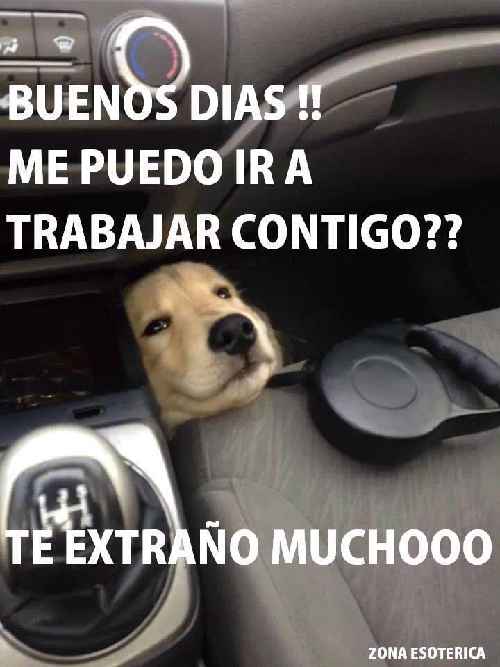Buenos Dias Buenos Dias Perros Perros Frases Y