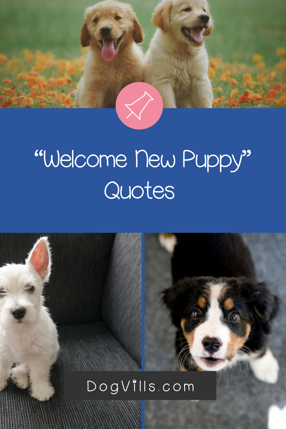 Top 10 Sweetest Welcome New Puppy Quotes Dogvills Puppy Quotes New Puppy Dog Adoption Quotes